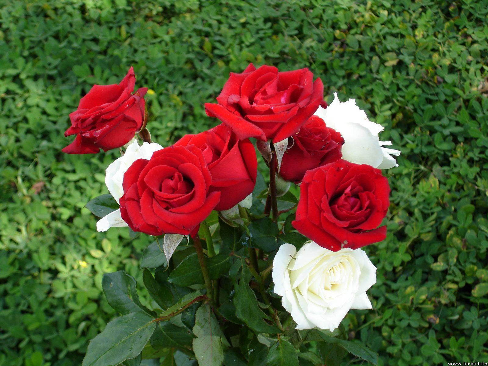 Five 5 Most Beautiful Flowers In The World Ghafla Ghana
