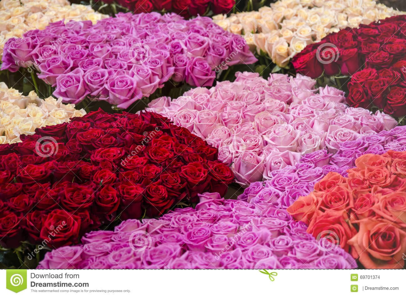Five 5 most beautiful flowers in the world ghafla ghana probably the most beautiful flower in the world humans have started to cultivate roses since 500 bc this pretty pleasant smelling flower has such a long izmirmasajfo