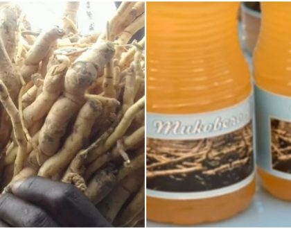 Excitement galore as natural libido booster 'Mukombero' is made into juice sold in supermarkets and retail shops