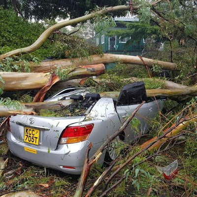 Cars worth millions reduced to junks after several trees fall at Serena Hotel( Photos)