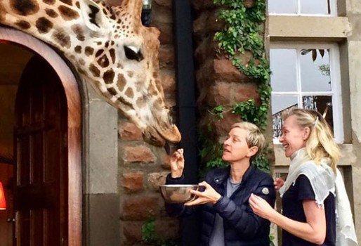 Ellen DeGeneres and her wifePortia de Rossi feed giraffe during their visit to Kenya