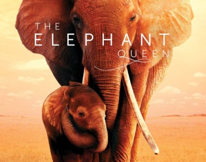 Details: 'The Elephant Queen' film to screen on Citizen TV this Easter Sunday