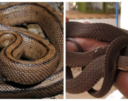 How a surprise treat at The Snake Park at Nairobi Museum helped conquer a lifelong phobia of snakes