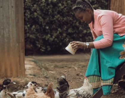 This is why a poultry-based startup idea has irresistible merits and worth your time!