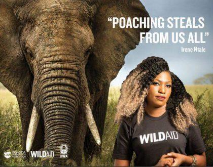 Ugandan Celebrities Join Wildlife anti-poaching Campaign