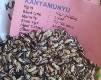 Did You Know? There's a Bean Variety Called Kanyamunyu?