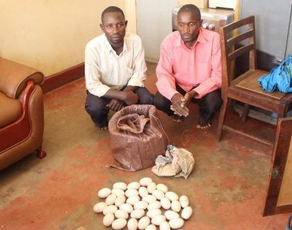 Men Caught Trying To Sell Crocodile Eggs.