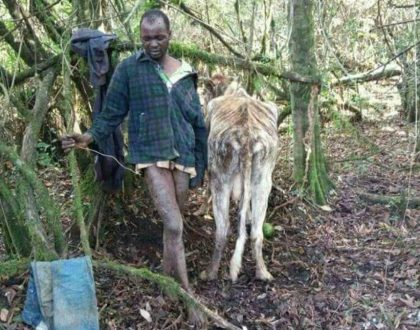 Kenyan Man caught having sex with a cow Says girls have HIV