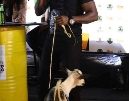 APASS the goat runs Backwards, disappoints Bebe Cool at the Royal Ascot Goat Race 2018