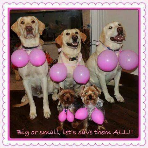 October is Breast Cancer Awareness Month! How to Make A Difference