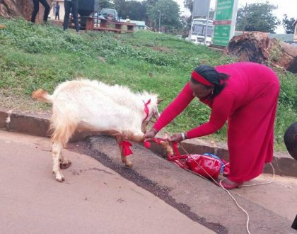 Ingrid Turinawe's Confiscated #Togikwatako Goat replaced By Kanungu People